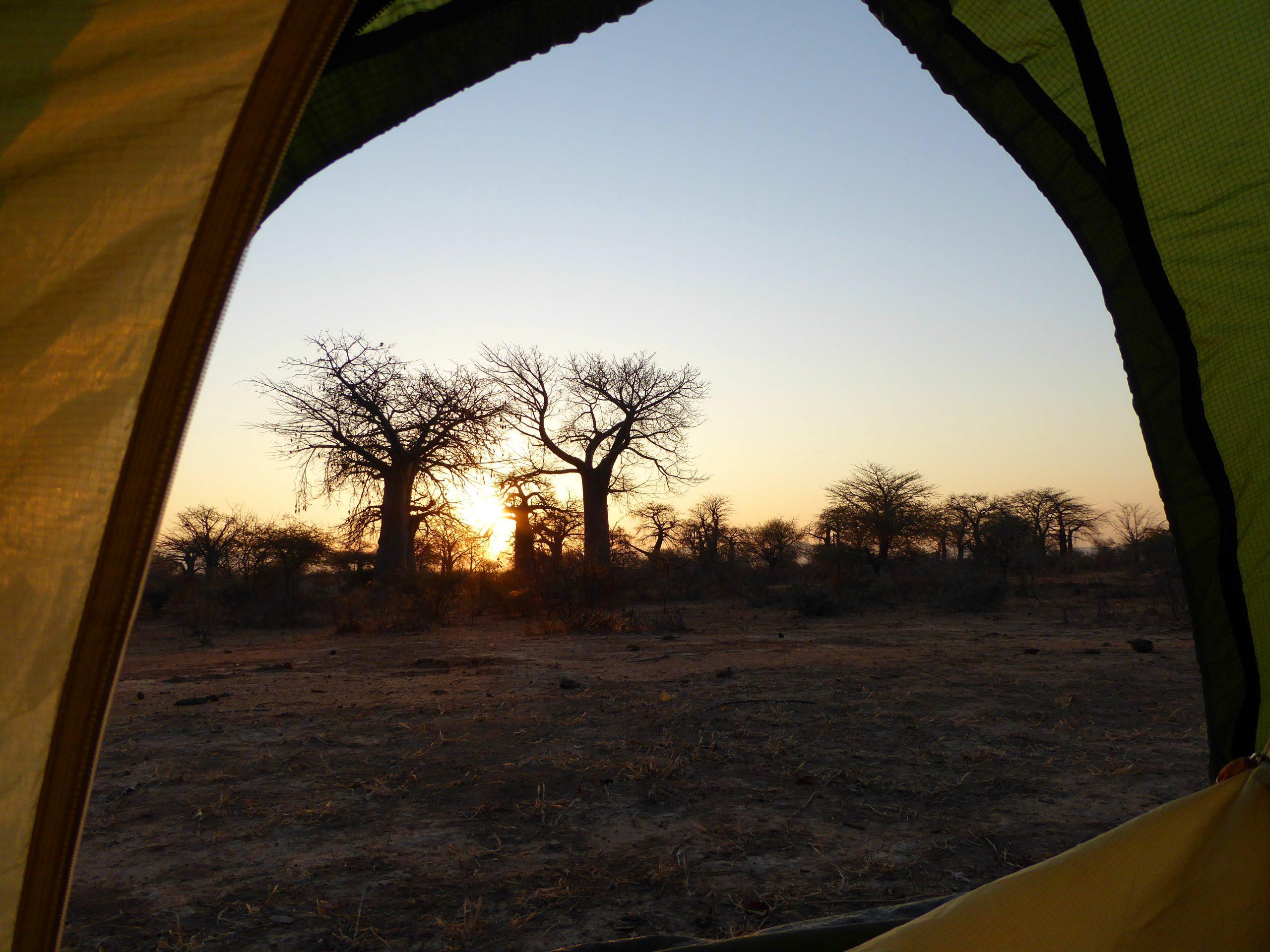 Radreise Afrika 2014 - Affenbrotbaum (Baobab) im Sonnenaufgang