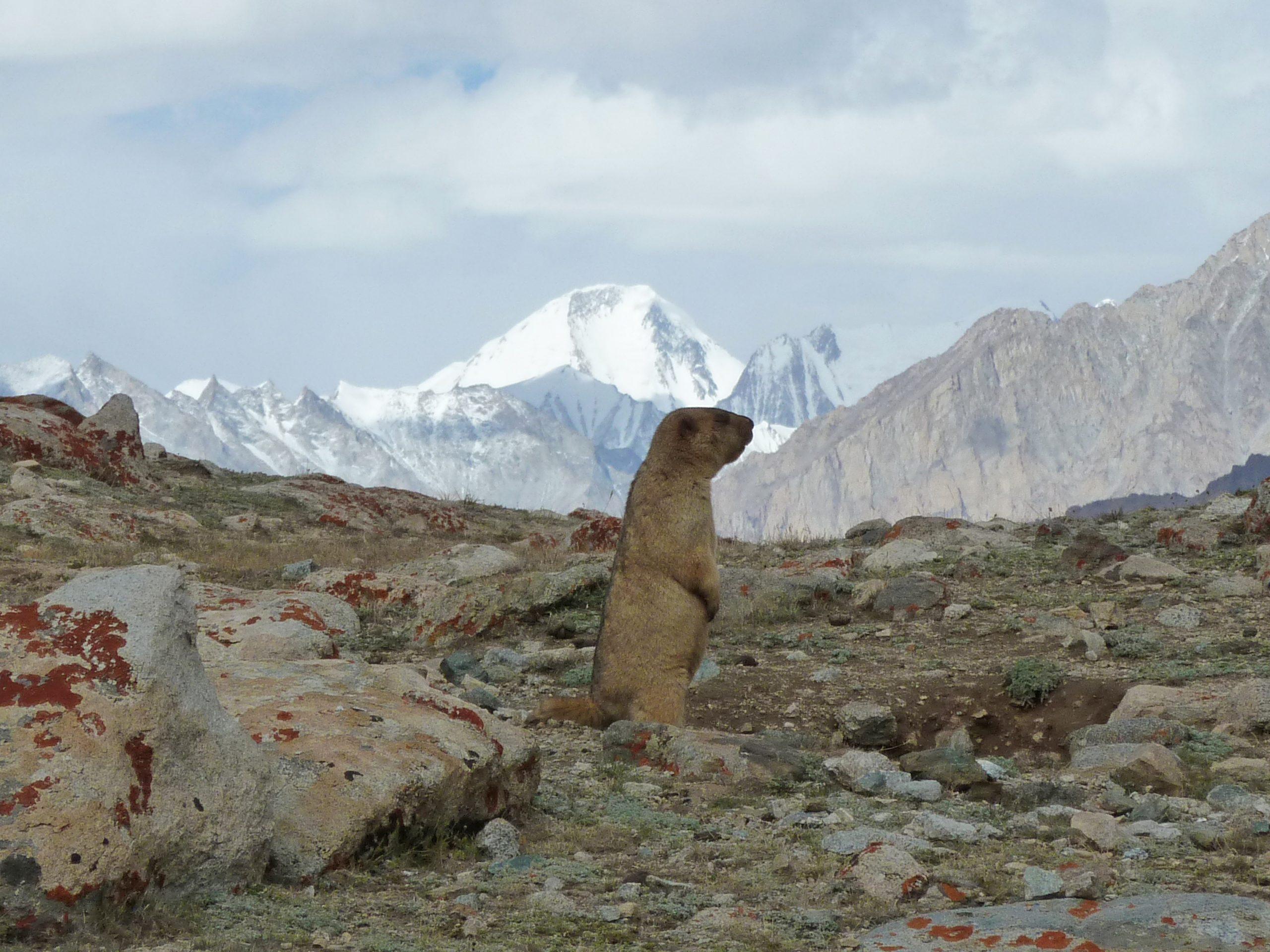 Radreise Ladakh 2012 - Murmeltier am Tsolding Buddha Park