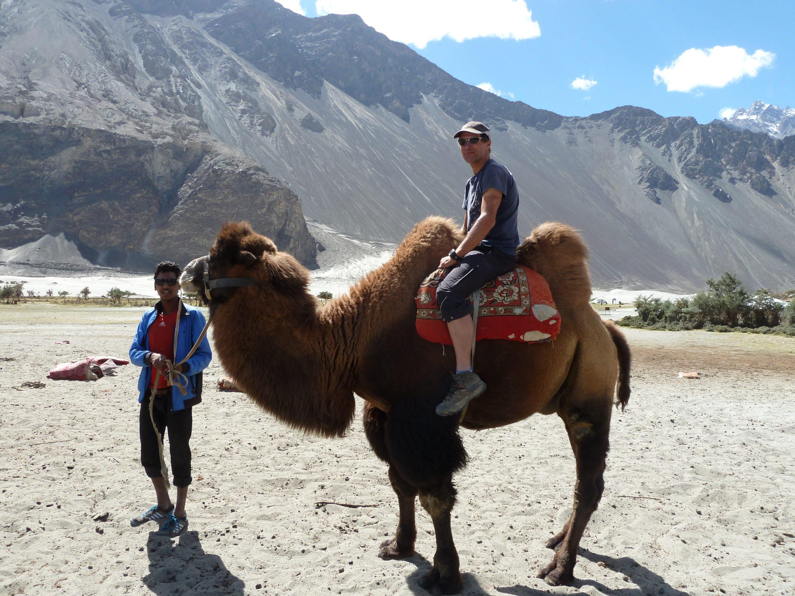Radreise Ladakh 2012 - Trampeltier im Nubra-Valley