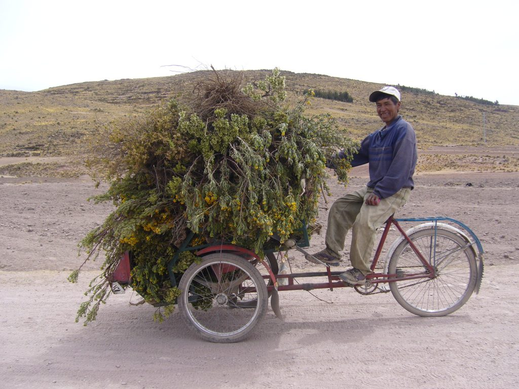 Radreise Peru 2008 - Rikscha mit Wiesenblumen