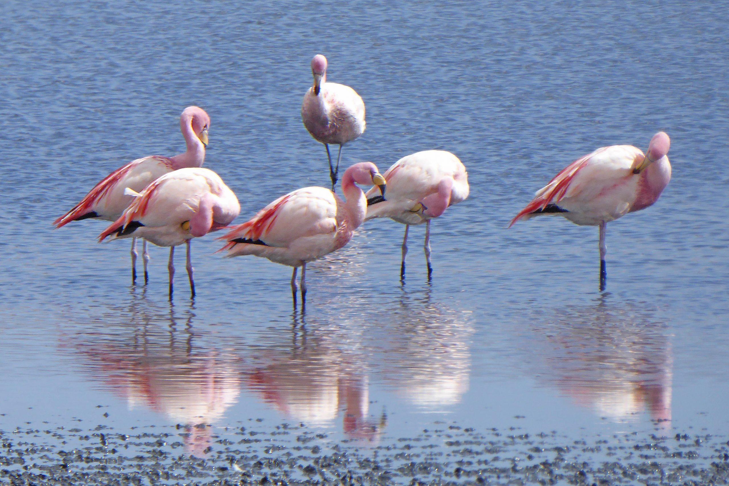 Radreise Südamerika 2019 - Flamingos