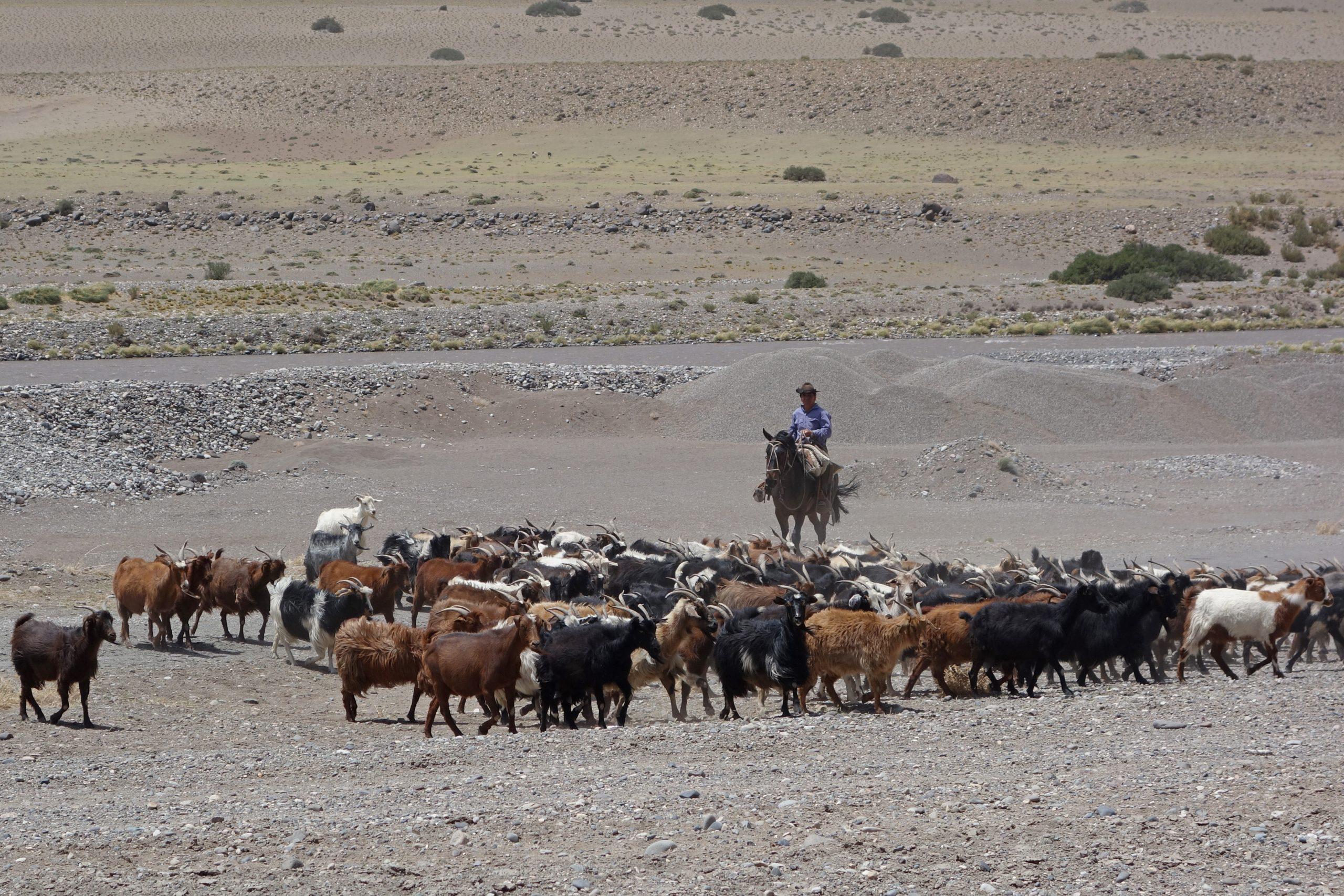 Radreise Südamerika 2019 - Gaucho und Ziegen am Rio Grande