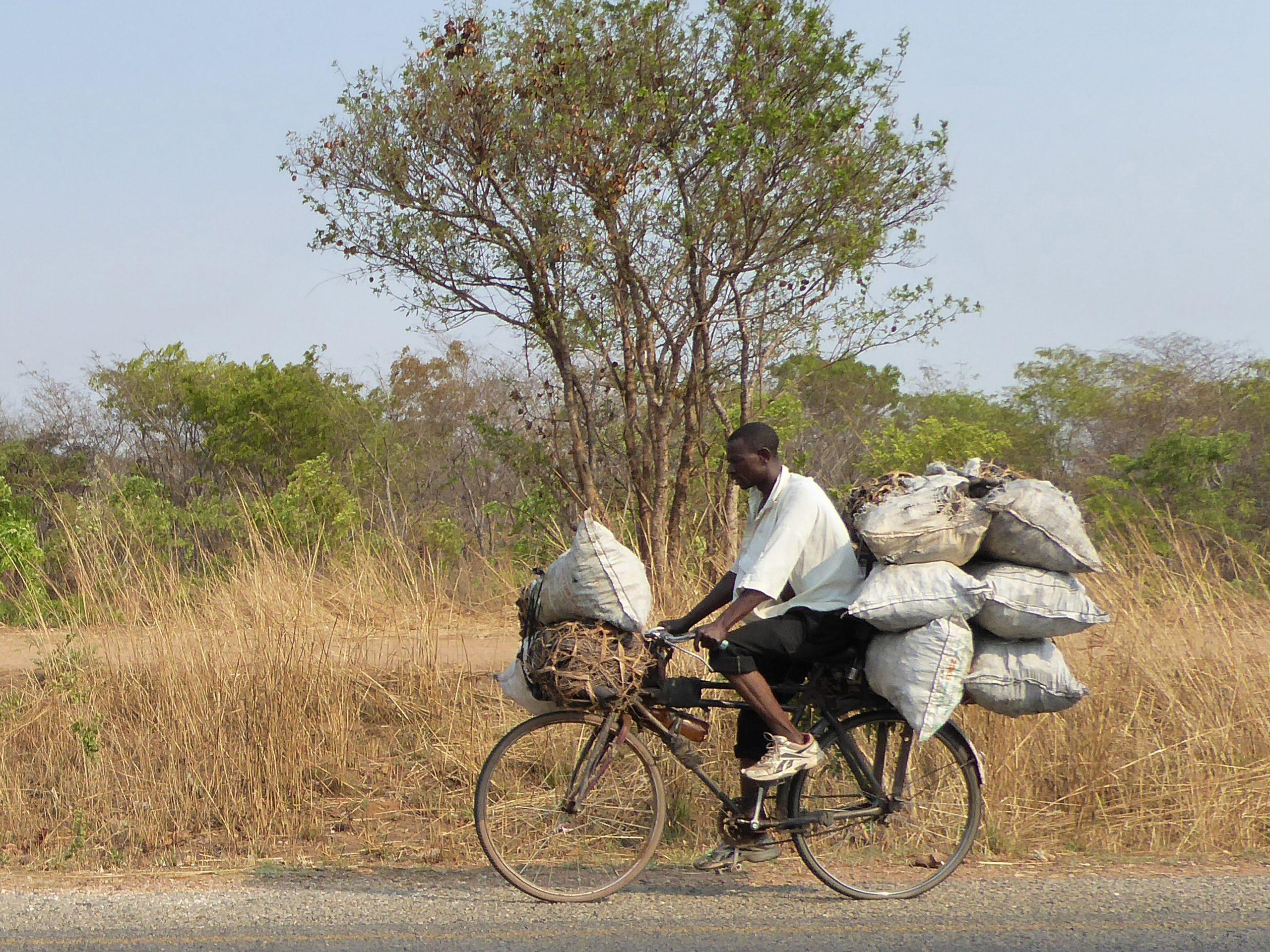 Radreise Afrika 2014 - Brennholz-Transport per Fahrrad