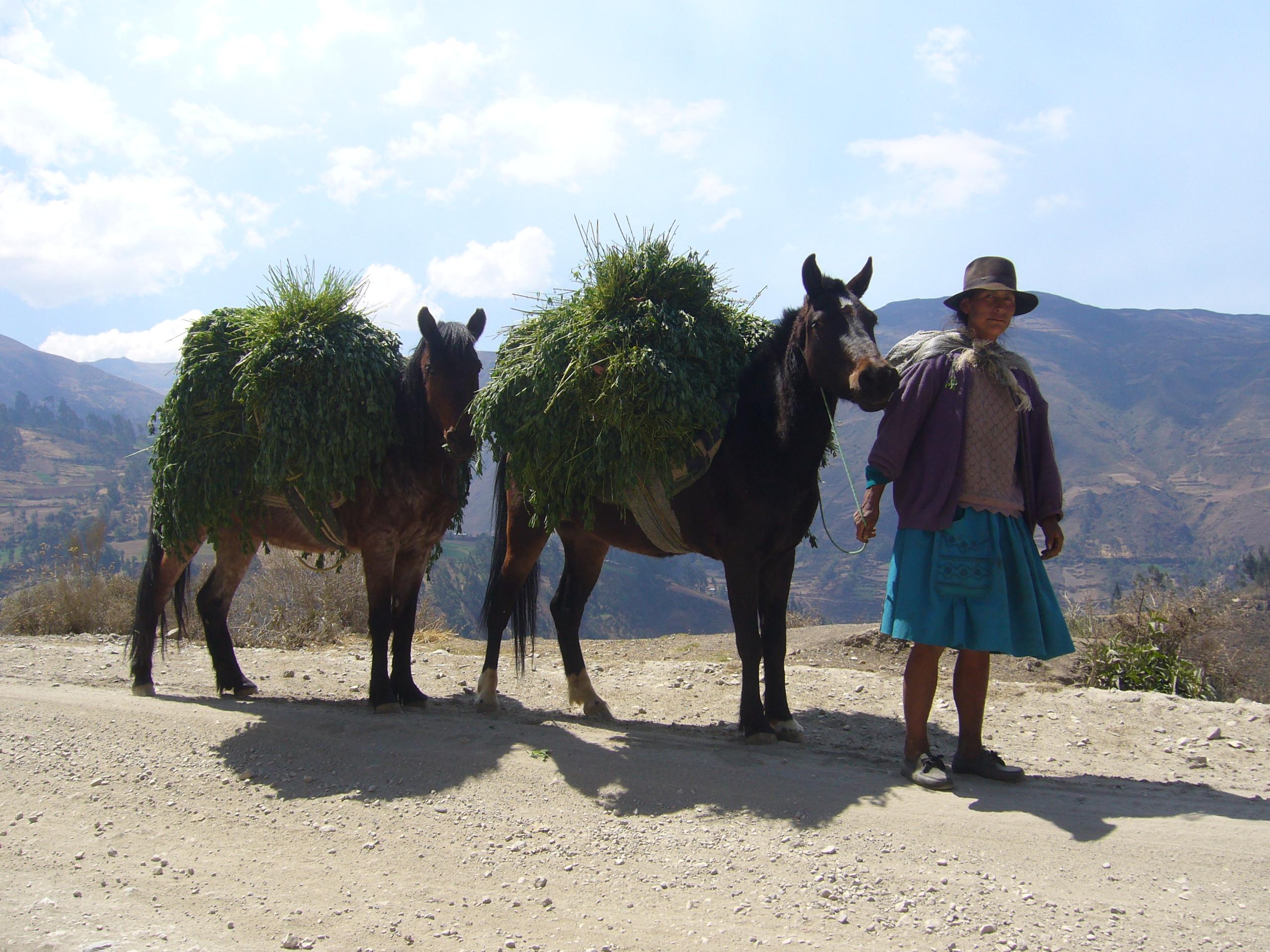 Radreise Peru 2008 - Frau mit Packesel